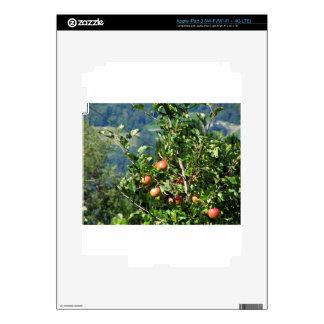 Manzanas rojas en ramas de árbol iPad 3 skins