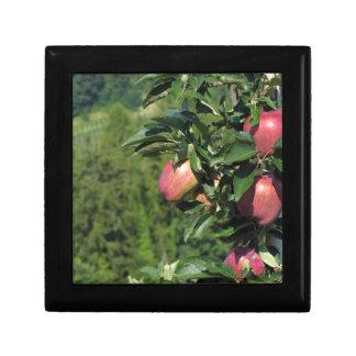 Manzanas rojas en ramas de árbol joyero cuadrado pequeño