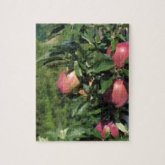 Manzanas rojas en ramas de árbol puzzle