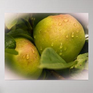Manzanas verdes frescas con una frontera brumosa póster