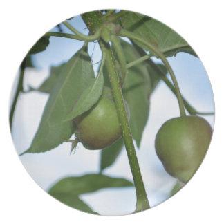Manzanas verdes platos
