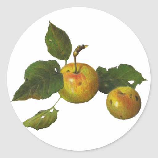 Manzanas verdes salvajes en lápiz del color: Arte Pegatina Redonda