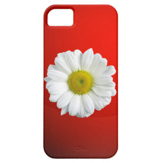 Manzanilla iPhone 5 Protector