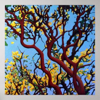Manzanita en otoño póster