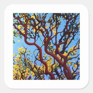 Manzanita in Autumn Square Stickers