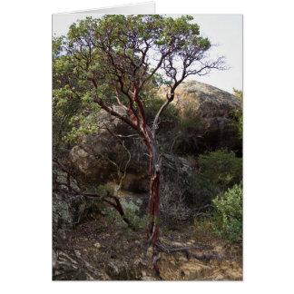 Manzanita Tree Greeting Card