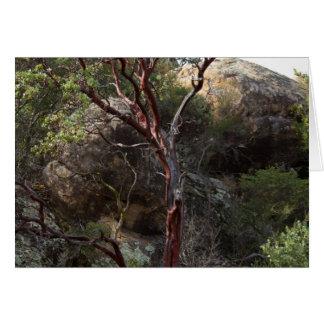 Manzanita Tree Cards