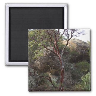 Manzanita Tree 2 Inch Square Magnet