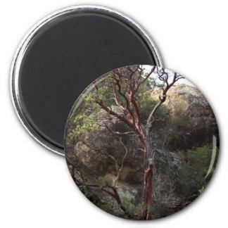 Manzanita Tree Magnet