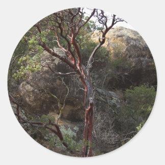Manzanita Tree Classic Round Sticker