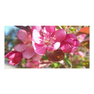 Manzano De cangrejo en la floración Tarjetas Con Fotos Personalizadas