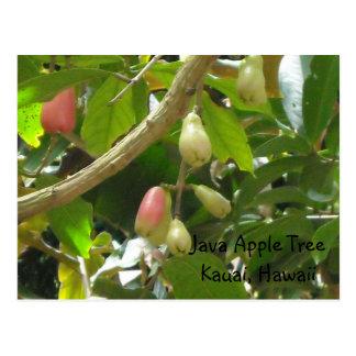Manzano de Java
