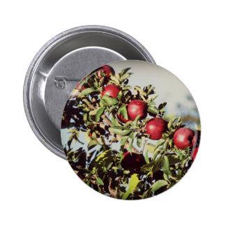 Manzano del vintage pin