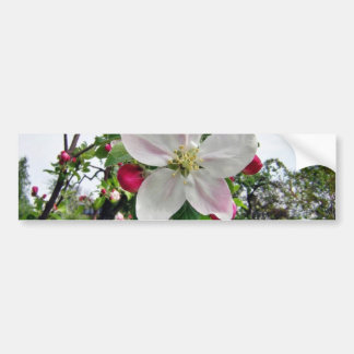 Manzano En flor Pegatina De Parachoque