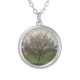Manzano En la floración Collar Plateado