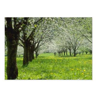 manzanos Blancos en las flores de la primavera Anuncio