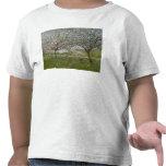 Manzanos En flor Camisetas