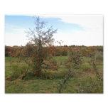 Manzanos, Nueva Inglaterra, foto 8x10
