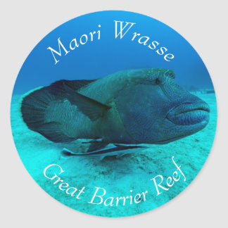 Maori Wrasse on the Great Barrier Reef Classic Round Sticker