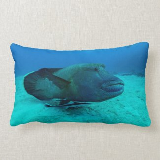 Maori Wrasse on the Great Barrier Reef Pillow