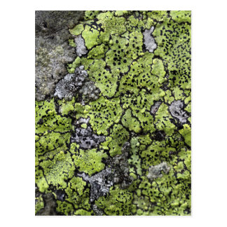 Map Lichen Postcard