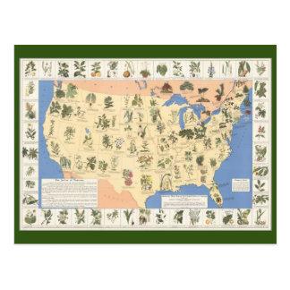 Map of Herbal Remedies postcard
