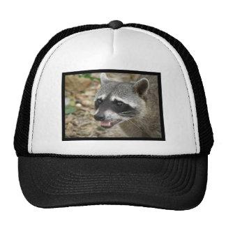 Mapache adorable gorras