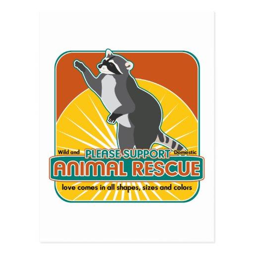 Mapache animal del rescate tarjetas postales