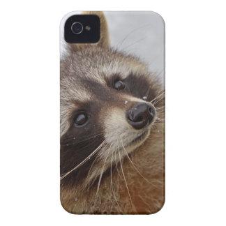Mapache Carcasa Para iPhone 4