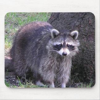Mapache - cojín de ratón tapete de raton