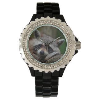 Mapache indignantemente lindo del bebé relojes