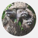 Mapache - los tres amigos etiqueta