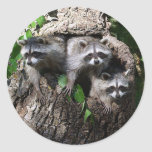 Mapache - los tres amigos pegatina redonda