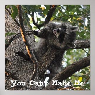 Mapache obstinado para arriba en un árbol - poster