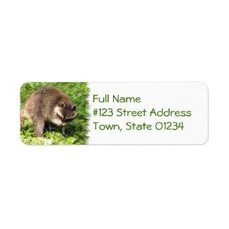 Mapache que baña etiquetas de correo etiqueta de remite