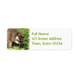 Mapache que baña etiquetas de correo etiquetas de remite