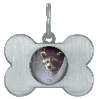 mapache rescatado y lanzado placas de mascota