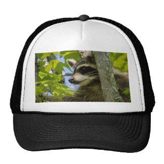 Mapache rocoso gorra
