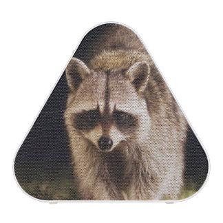 Mapache septentrional, lotor del Procyon, adulto Altavoz Bluetooth