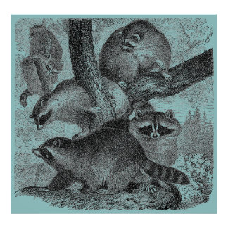 Mapaches Poster