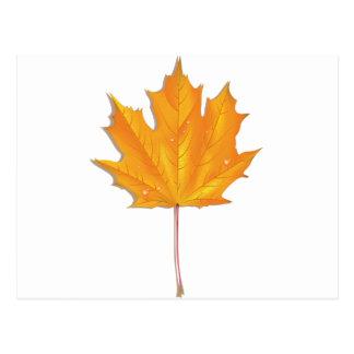 Maple autumn leaf postcard