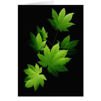 Maple branch 1 card