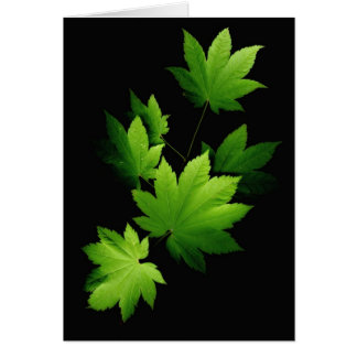 Maple branch 1 greeting cards