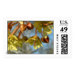 maple_flowers stamp