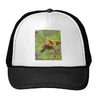 Maple Flowers Trucker Hat