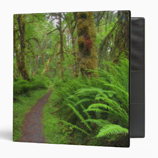 Maple Glade trail, ferns and moss covered 3 Ring Binder