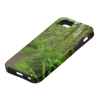 Maple Glade trail, ferns and moss covered iPhone 5 Cover
