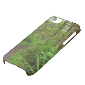 Maple Glade trail, ferns and moss covered Case For iPhone 5C