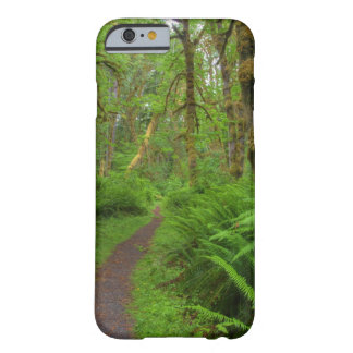 Maple Glade trail, ferns and moss covered Barely There iPhone 6 Case