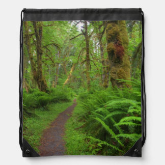 Maple Glade trail, ferns and moss covered Cinch Bag